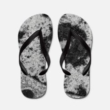 Nucleolus and nuclear membrane in mouse Flip Flops
