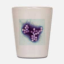Norovirus particles, TEM Shot Glass