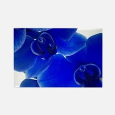Sensual Blue Orchilds by KD Rectangle Magnet