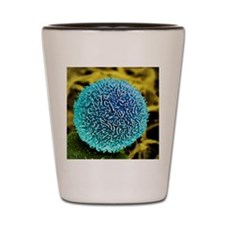 Pancreatic cancer cell, SEM Shot Glass