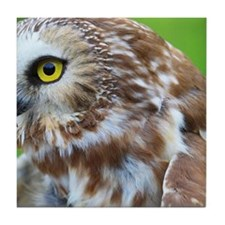 Northern Saw-whet Owl Tile Coaster