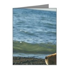 Dog relaxing on beach Note Cards (Pk of 20)