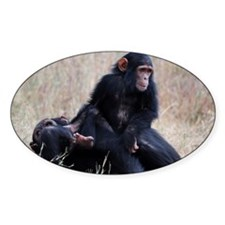 Mother and baby chimpanzee playing Decal