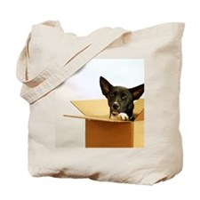 Border collie mix dog in box. Tote Bag
