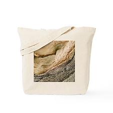 m1950119 Tote Bag
