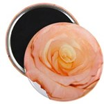 Peach Rose Magnet