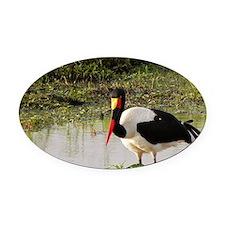 saddle billed stork kenya collecti Oval Car Magnet