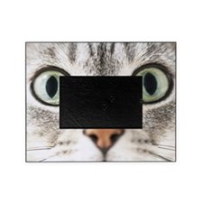 Cat, close-up Picture Frame