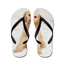 Labradoodle puppy on bed Flip Flops