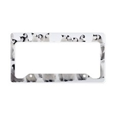 Emperor penguin chicks, ome s License Plate Holder