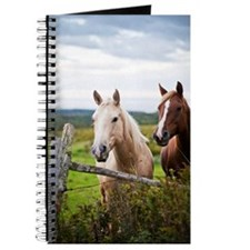 Two horses stand near fence in farm field  Journal