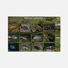 Tanganyika Cichlids calendar Rectangle Magnet