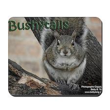 Bushytails Mousepad
