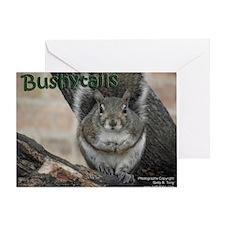 Bushytails Greeting Card