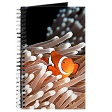 A clownfish hiding in an anemone Journal
