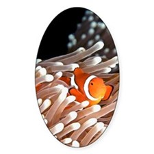 A clownfish hiding in an anemone Decal