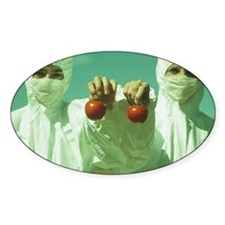 Scientists holding GM tomatoes Decal