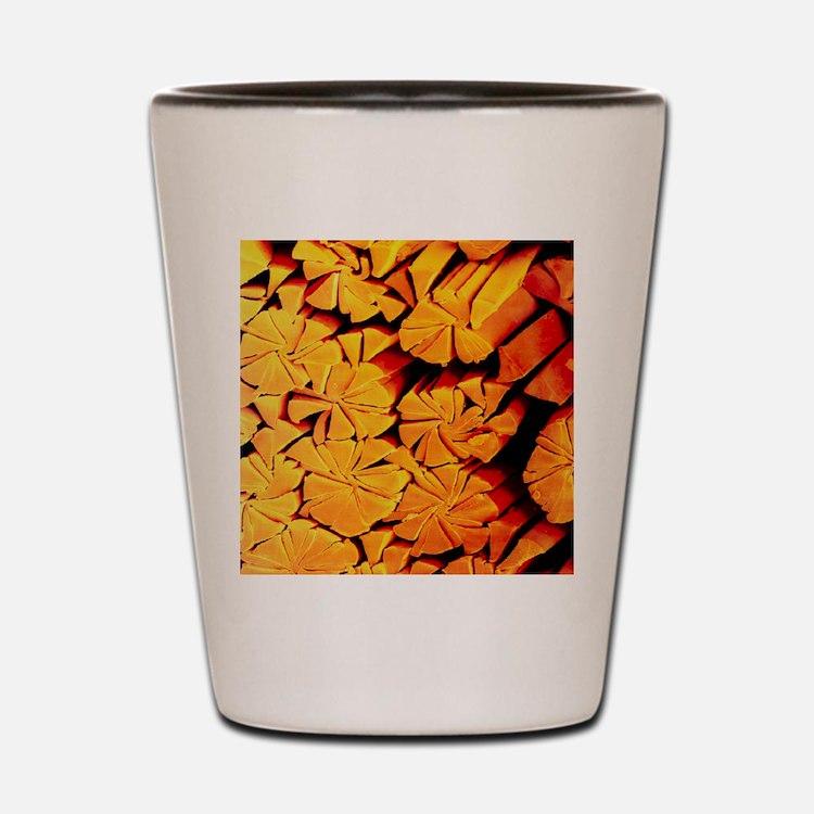 Scanning electron micrograph of microfi Shot Glass