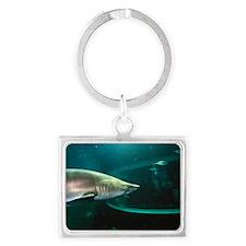Shark in aquarium Landscape Keychain