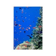Agincourt Reef, Great Barrier Ree Rectangle Magnet