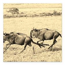"Wildebeest Crossing Sepi Square Car Magnet 3"" x 3"""