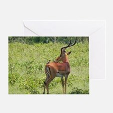 impala buck with oxpeckers kenya col Greeting Card
