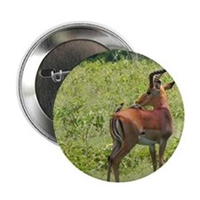 """impala buck with oxpeckers kenya coll 2.25"""" Button"""