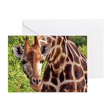 rothschild giraffe looking kenya col Greeting Card