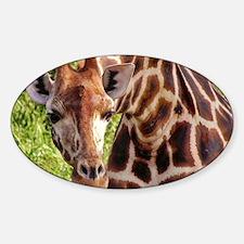 rothschild giraffe looking kenya co Decal
