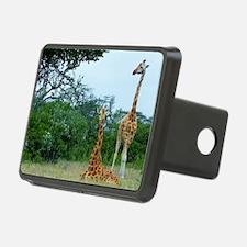 rothschild giraffe pair at Hitch Cover