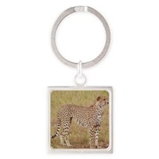 cheetah brother kenya collection Square Keychain