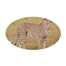cheetah brother kenya collection Oval Car Magnet