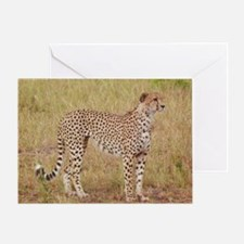 cheetah brother kenya collection Greeting Card