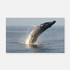 Humpback Whales Rectangle Car Magnet