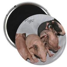 Skinny pigs Magnet