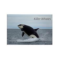 Killer Whales Rectangle Magnet