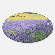 Lavender Sticker (Oval)