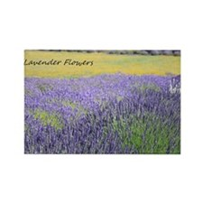 Lavender Rectangle Magnet