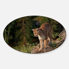 Cougar 1 Decal