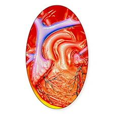 Artwork of a healthy human heart Bumper Stickers