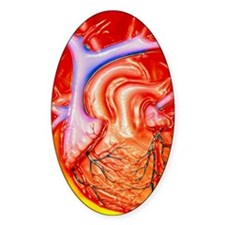 Artwork of a healthy human heart Decal