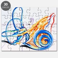 Artwork of inner ear Puzzle