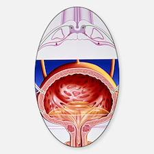 Artwork of a bladder and its reflex Sticker (Oval)