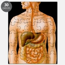 Artwork of the human digestive system Puzzle