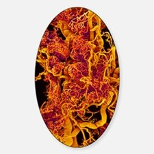Blood vessels in a frog ovary, SEM Decal