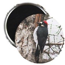 Calif. Redhead Woodpecker Magnet
