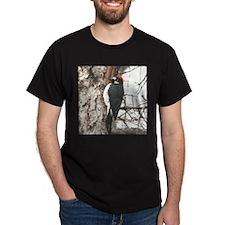 Calif. Redhead Woodpecker T-Shirt