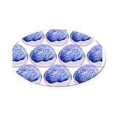Brains in petri dishes, conceptual Oval Car Magnet