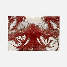 Brainstem cross-section, light mi Rectangle Magnet