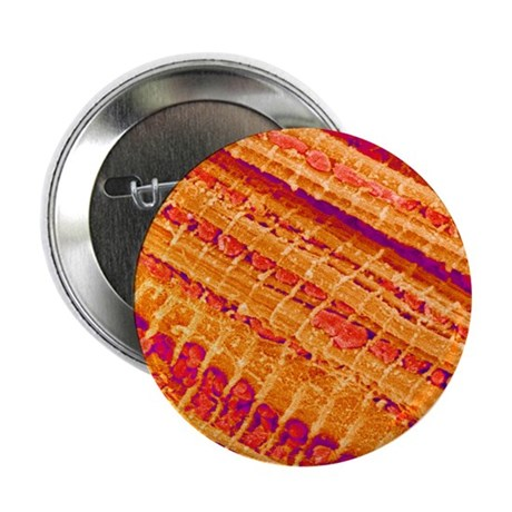 "Cardiac muscle 2.25"" Button"